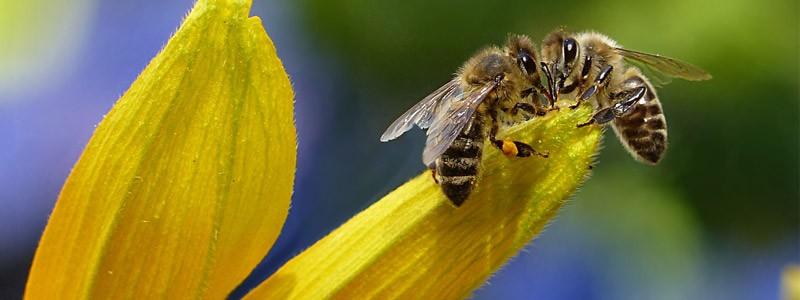 分类:蜜蜂